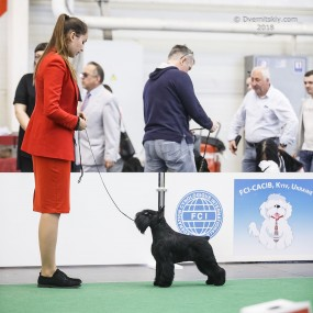 "28 - 29.04.2018 2xCACIB  and special "" Schnauzers Championship 2018"