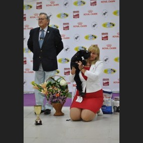 27-28.05.17 ISPU WINNER SHOW-2017 / National Speciality Club Show